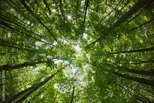 Canvas Print spring forest treetops (intentionally distorted image; shot with