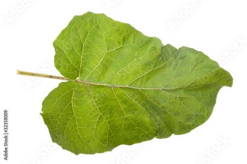 Fényképezés Burdock leaf