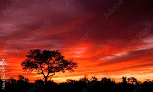 Fototapeta premium Afrykański zmierzch w Kruger parku narodowym, Południowa Afryka