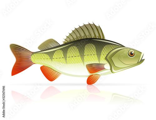 perch vector illustration