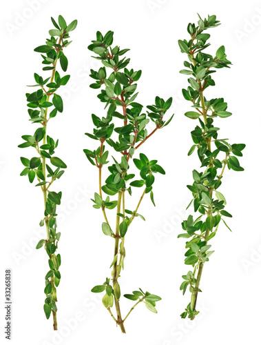 Fotografie, Obraz Fresh green thyme twigs, isolated