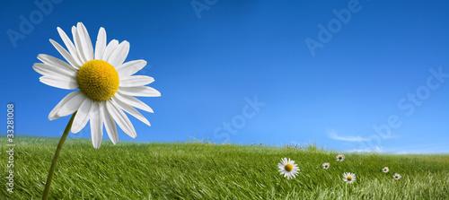 Slika na platnu Picturesque summer landscape and daisy flowers