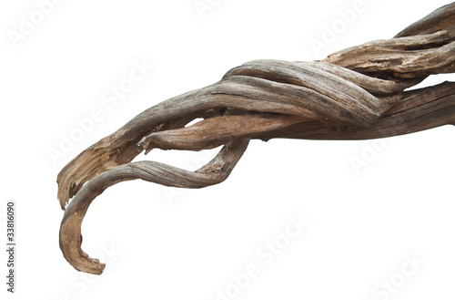 Fotografia Dried roots.