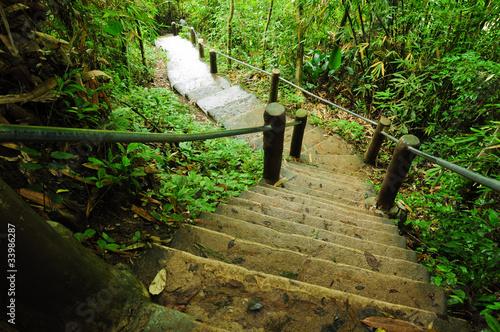 kamienne schody w parku przyrody