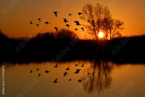 Photo Evening Ducks