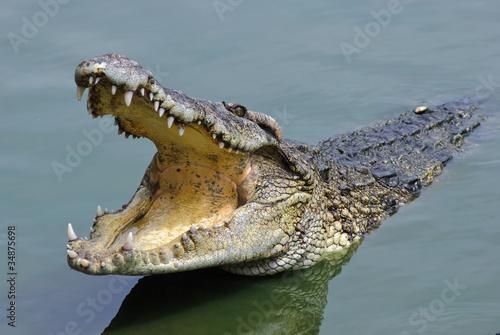 Obraz na płótnie Salt water crocodile, Samutprakarn crocodile farm