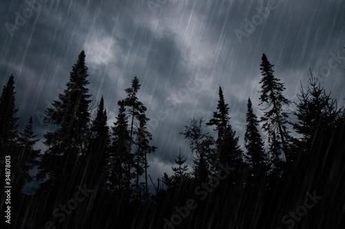 Fotografia Rainstorm in forest