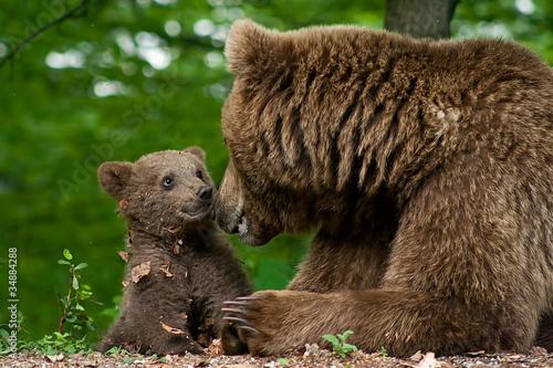 Obraz na plátne Brown bear and cub