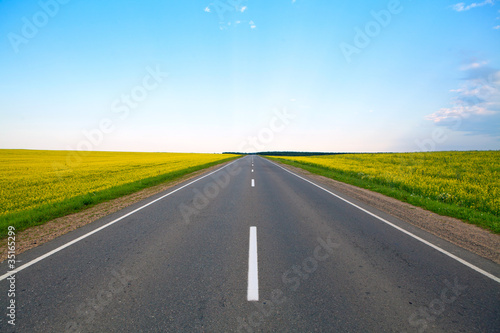 Fotografia, Obraz Highway of flowering fields and blue sky