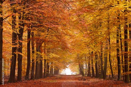Slika na platnu Sand lane with trees in autumn