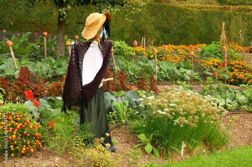 Fotografia scarecrow in the veg' garden