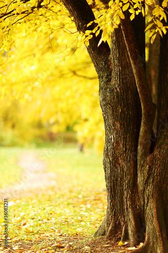 autumn park #36083231