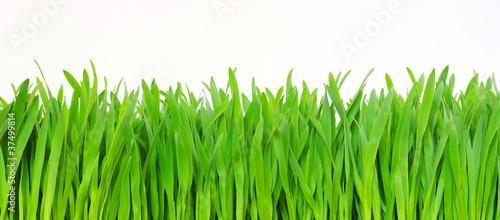 green grass #37499814