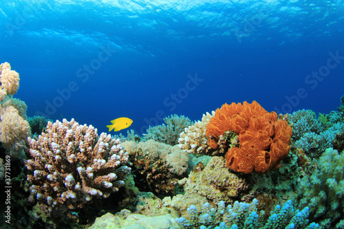 Carta da parati Colorful Corals on a Red Sea reef