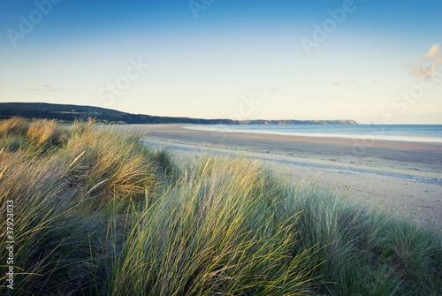 Obraz na płótnie grass on sandy beach, pembrokeshire, wales