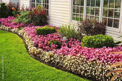 Valokuvatapetti Colorful flower garden