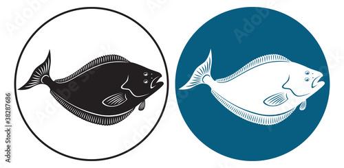Photo fish halibut