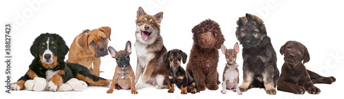 Photo large group of puppies