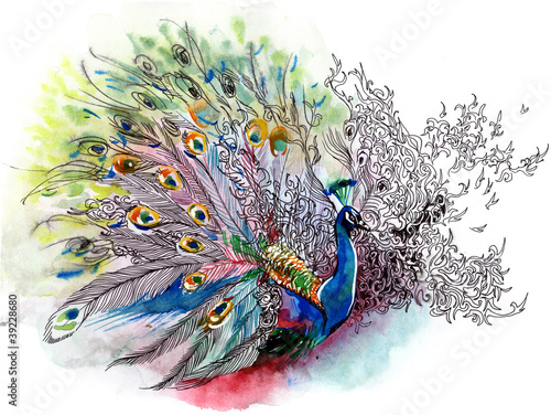 Stampa su Tela peacock (series C)