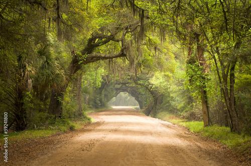 Charleston SC Dirt Road Forest Spanish Moss South Edisto