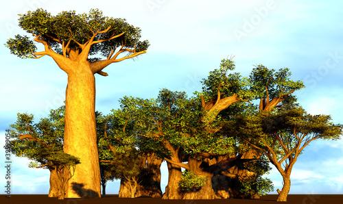 Cuadros en Lienzo African baobabs