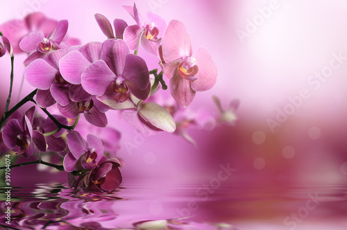 Orchid flowers composition