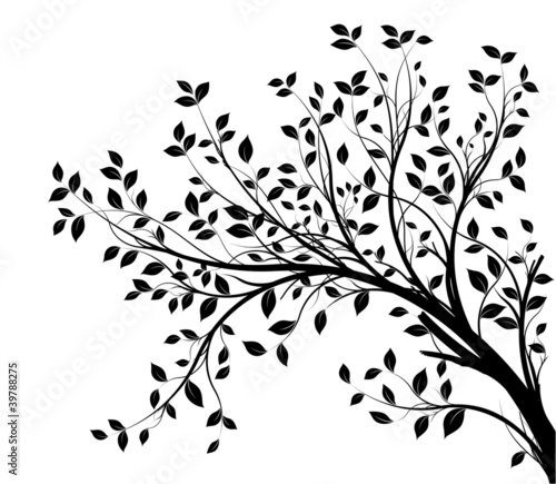 Foto tree branches silhouette isolated white background