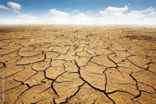 Wallpaper Mural Dryed land with cracked ground. Desert