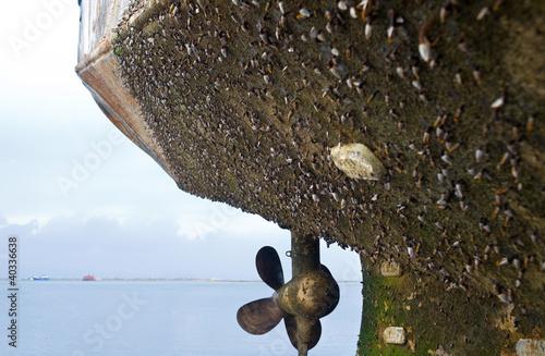 marine fouling