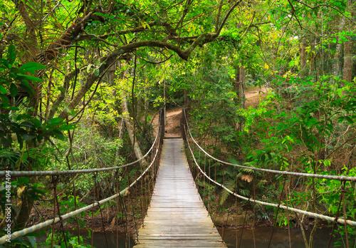 Photo Bridge to the jungle,Khao Yai national park,Thailand