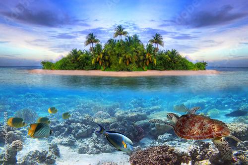 Fotografia, Obraz Marine life at tropical island of Maldives