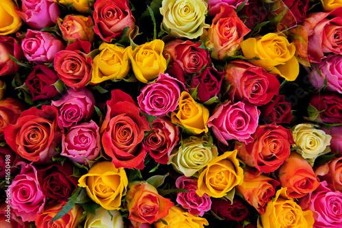 Obraz na plátne Flowers. Colorful roses background