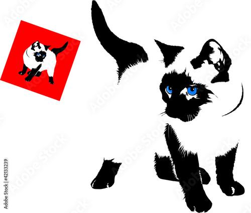 Photo siamese cat