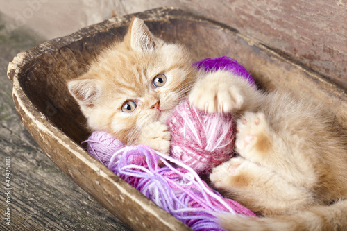Exotic kitten playing with a ball of wool #42425810