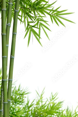 Fototapeta premium bambus z liśćmi