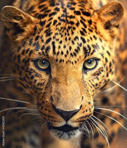Canvas Print Leopard portrait