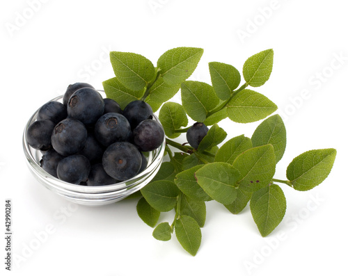 Photo Blue bilberry or whortleberry