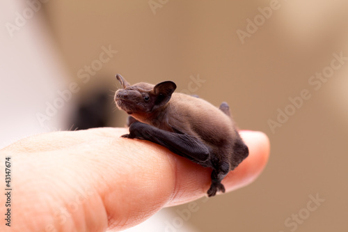 Baby Bat Sitting On Finger