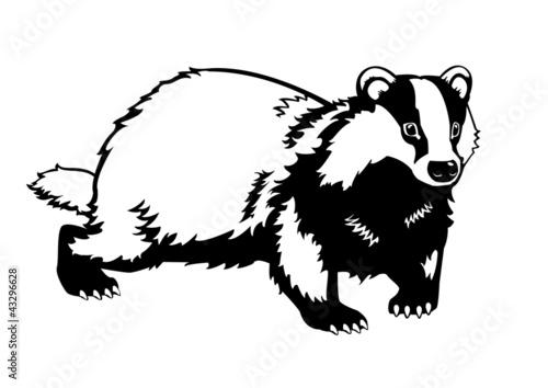 Obraz na płótnie Eurasian badger black and white