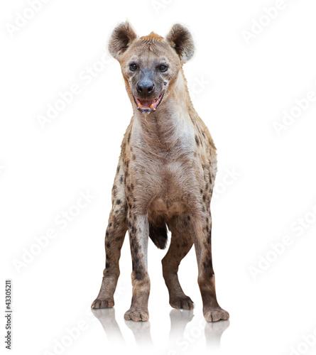Fotografie, Tablou Portrait Of A Hyena