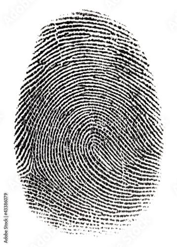 Real fingerprint in white background Super macro #43386079