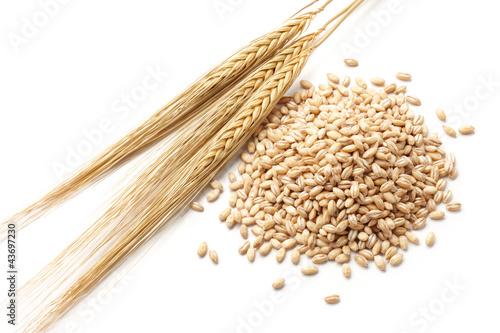 barley with grains Fototapete