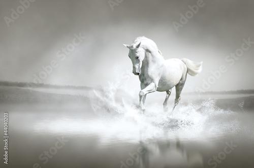 Obraz na plátně White horse running through water