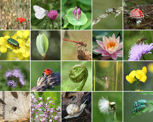 Biodiversity collage