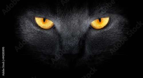 View from the darkness. muzzle a cat on a black background. #44285895