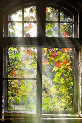 Fototapeta Widok z okna stare budynku na jesienny ogród wysoka