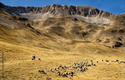 Fototapeta shepard on gran sasso abruzzo