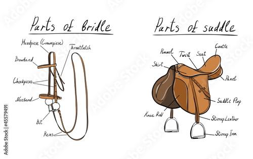 Tablou Canvas saddle-bridle