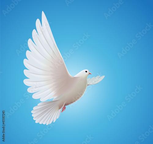 Billede på lærred white dove