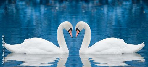 Obraz na plátně Couple of swans